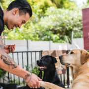 How your cell phone could find a home for lost and abandoned animals