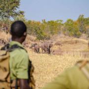 Wildlife Poachers