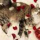 cat valentine's day
