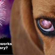 Fireworks - How to keep your pets safe