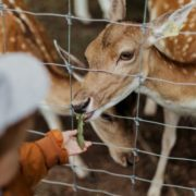 RUSSIA BANS PETTING ZOOS, ANIMAL FIGHTS, AND KILLING STRAY CATS AND DOGS