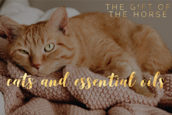 cats and essential oils