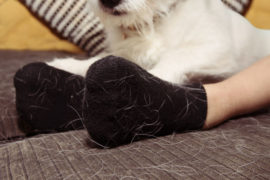 Keeping your pet's hair-raising issue under control