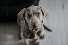 Pet abandonment skyrockets amid lockdown Level 3