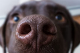 The Dog's Sense of Smell