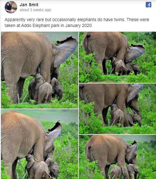 Twin Elephants - Facebook