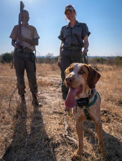 Dog handlers Precious Malapane [left] and Robynne Wasas [right] (Image: Sean Viljoen / SAWC / Ivan Carter WCA / Caters News)