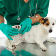 Pet welfare during Covid-19