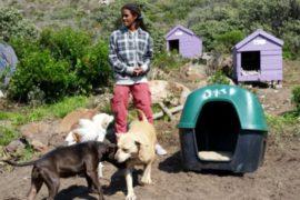 Cape dog caretaker