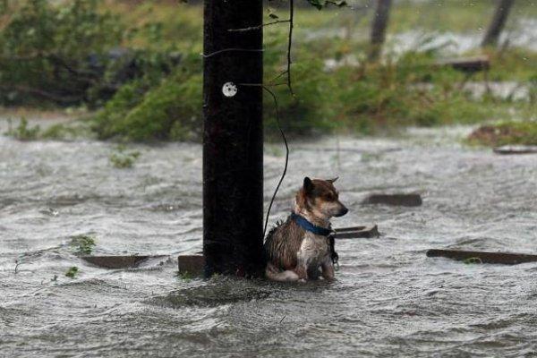 Abandon Dogs