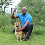 Chain your dog and get a fine says SPCA - image