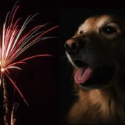 Fireworks and dog - image