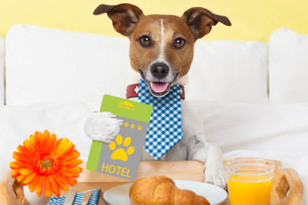 5 dog hotels you should know about in South Africa