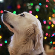 Are you emotionally ready to part with your pet this Festive Season?