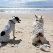 dog walking restrictions on clifton beach