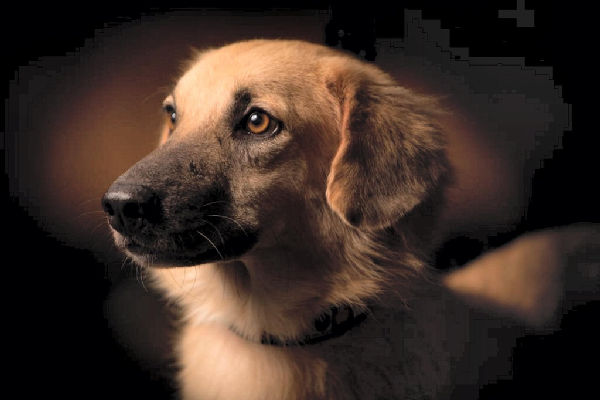pet abandonment now punishable by law in the UAE
