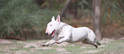 5 dog hotels you should know about in South Africa - Sunshine Pet Resort