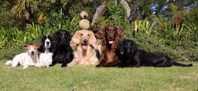 5 dog hotels you should know about in South Africa - Zimzala K9 Hotel