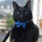 5 star pet hotel appoints black cat cfo