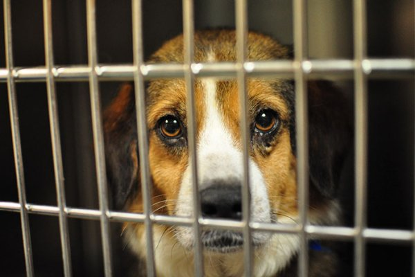 New Jersey Puppy Mill