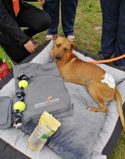 Garden Route SPCA Donation