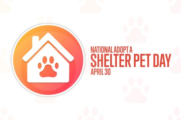 The importance of National Adopt A Shelter Pet Day 2021