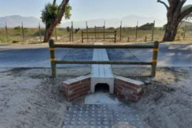 Toads in the hole as Cape Town gets tunnels for amorous amphibians