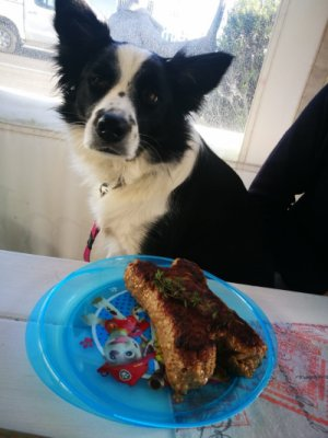 Dogs get their own menu at this Cape Town restaurant - image2