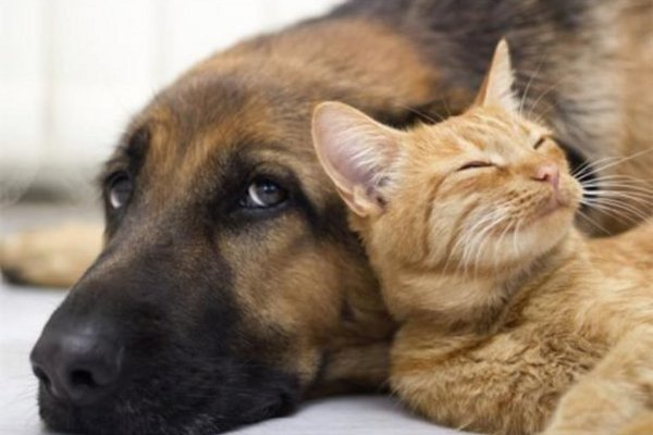 City of Joburg to amend bylaws for dogs and cats - image