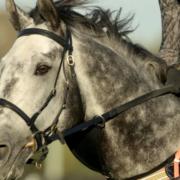 Do Horses Like Humans