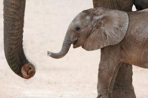 Zoos Face Ban