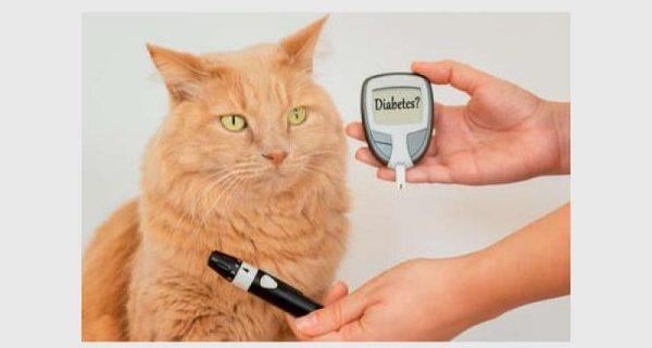 Pet diabetes is not a death sentence