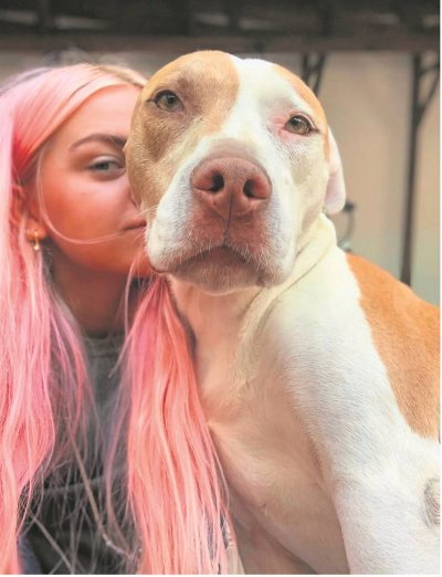 True rescue story entertains, educates and debunks stigma about pit bulls