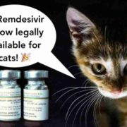 Vets Can Now Legally Treat FIP In Cats