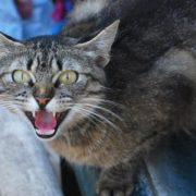 Durban cat owners warned of deadly outbreak of virus
