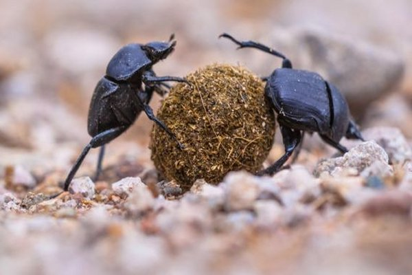 Global insect decline may see 'plague of pests'