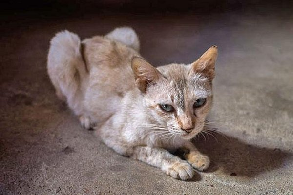 Ceasing Sudden Weight Loss in Cats