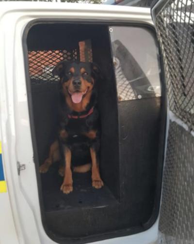 Bonzo sitting in police van