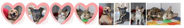 BeMyValentine – Homeless pets offering love
