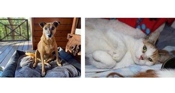 #BeMyValentine – Homeless pets offering love