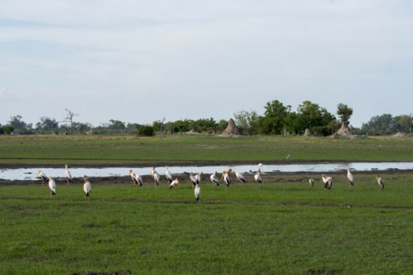 Okavango Delta under threat from oil, gas exploration
