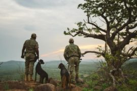 Top dogs brought in to sniff out KZN's rhino poachers