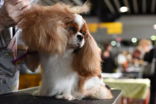 'Designer' dog and cat breeding to be outlawed this year in Scotland