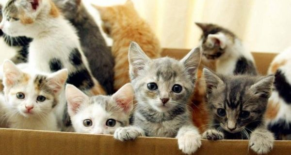 Facebook pet sales warning over kittens and puppies