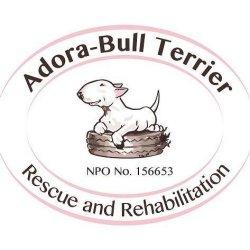 Adora-Bull Terrier Rescue