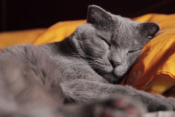 Why do cats sleep