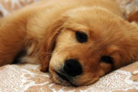 Surviving A Canine's Adolescence