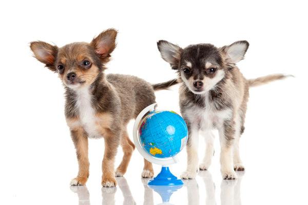 Can Dogs Get Coronavirus