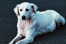 Pet owners warned of new scam which could put their lives at risk
