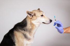Understanding pet diabetes